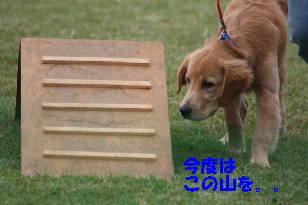 bu-98890001.jpg