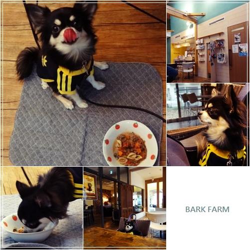 cats_20121113004148.jpg