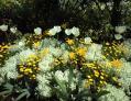 花の美術館_浜名湖ガーデンパーク_Go!_Flowers, photograph