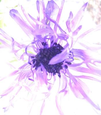 こてちゃい花写真へ_flower_Kotechai