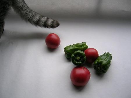 猫と野菜_ピーマンとトマトと猫のさくら_Kotechai_450x_DSCN7468