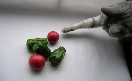 猫と野菜_ピーマンとトマトと猫のさくら_Kotechai_450x_3