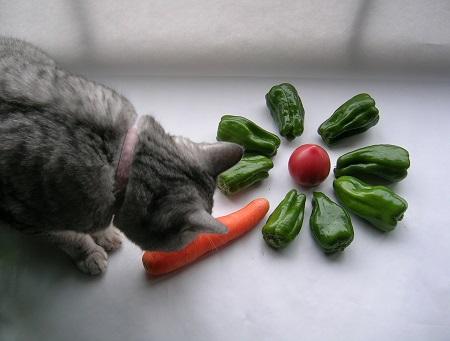猫と野菜_ピーマンとトマトと人参と猫のさくら_Kotechai_450x
