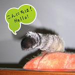 こんにちは。Hello_Kotechai_何でしょう_1