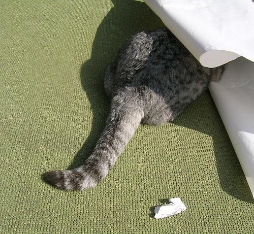 紙をかじる猫_Kotechai_500x