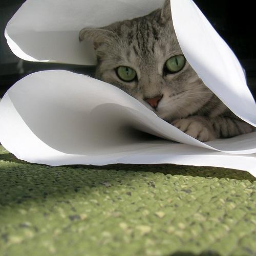 紙をかじる猫_Kotechai_02_500x500.