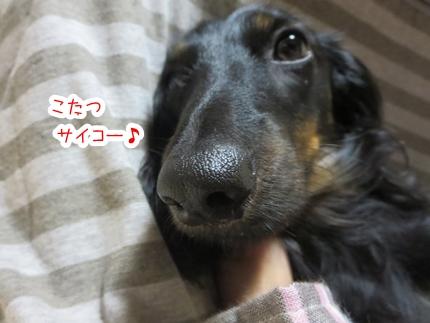 IMG_1024_3.jpg