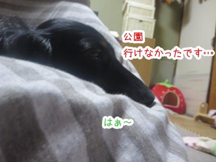 IMG_1026_4.jpg