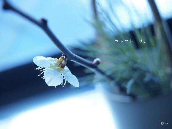 P1105971 - コピー