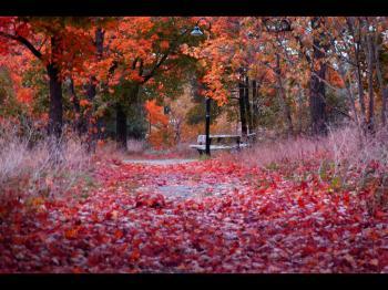 nature-782_convert_20121201043352.jpg