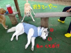 068_20120906224501.jpg