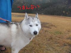 159_20121118225834.jpg