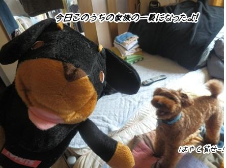 006_20120614232629.jpg