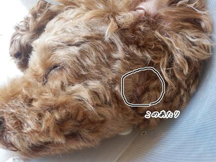 010_20120719233518.jpg