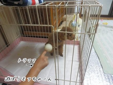 071_20120713163224.jpg