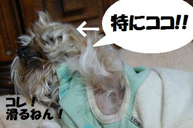 dog208_20121218223008.jpg