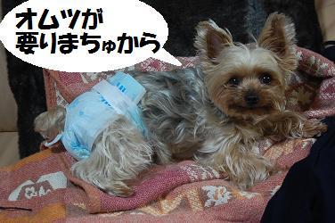 dog216.jpg