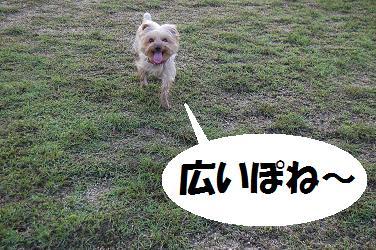 dog217.jpg