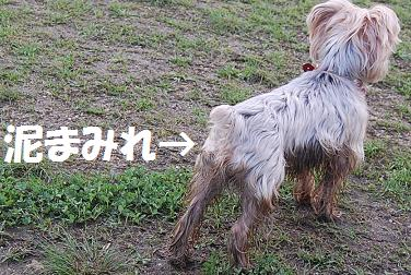 dog218.jpg