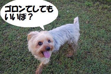 dog219.jpg