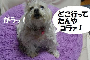 dog220.jpg