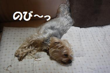 dog222.jpg