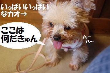 dog224.jpg