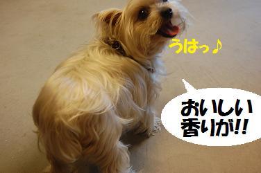 dog225.jpg