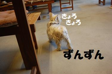 dog226.jpg
