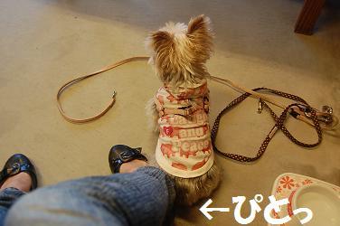 dog227.jpg