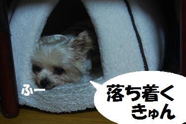 dog228.jpg