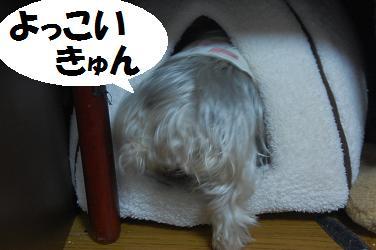 dog229.jpg