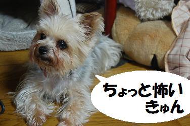 dog230.jpg