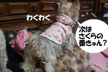 dog231.jpg