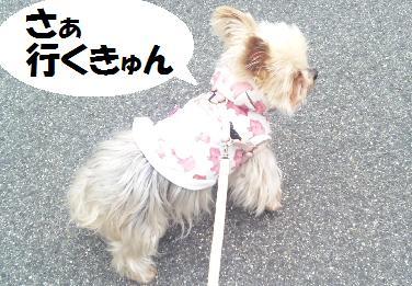 dog232.jpg