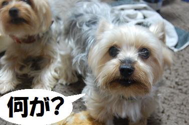 dog233.jpg