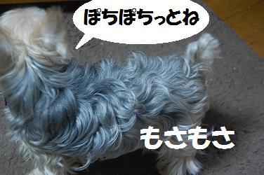 dog235.jpg