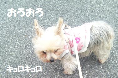 dog236.jpg