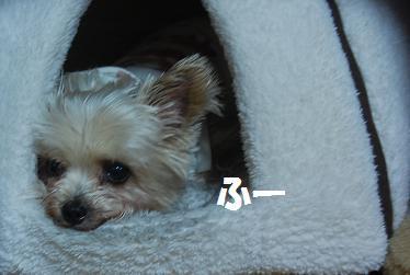 dog238.jpg