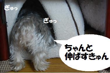 dog239.jpg