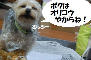 dog242.jpg
