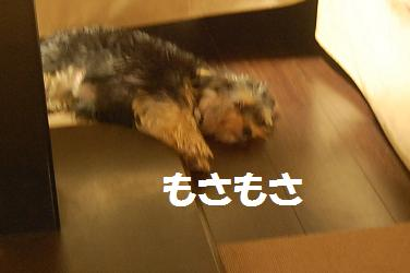 dog243.jpg
