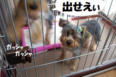 dog245.jpg