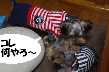 dog246.jpg