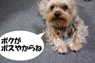 dog249.jpg