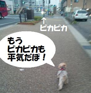 dog260.jpg