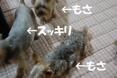 dog263.jpg