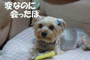 dog264.jpg