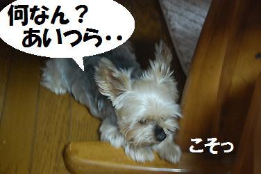 dog268.jpg