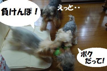 dog269.jpg